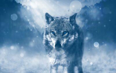 Der mit dem Wolf tanzt – Michael Blake